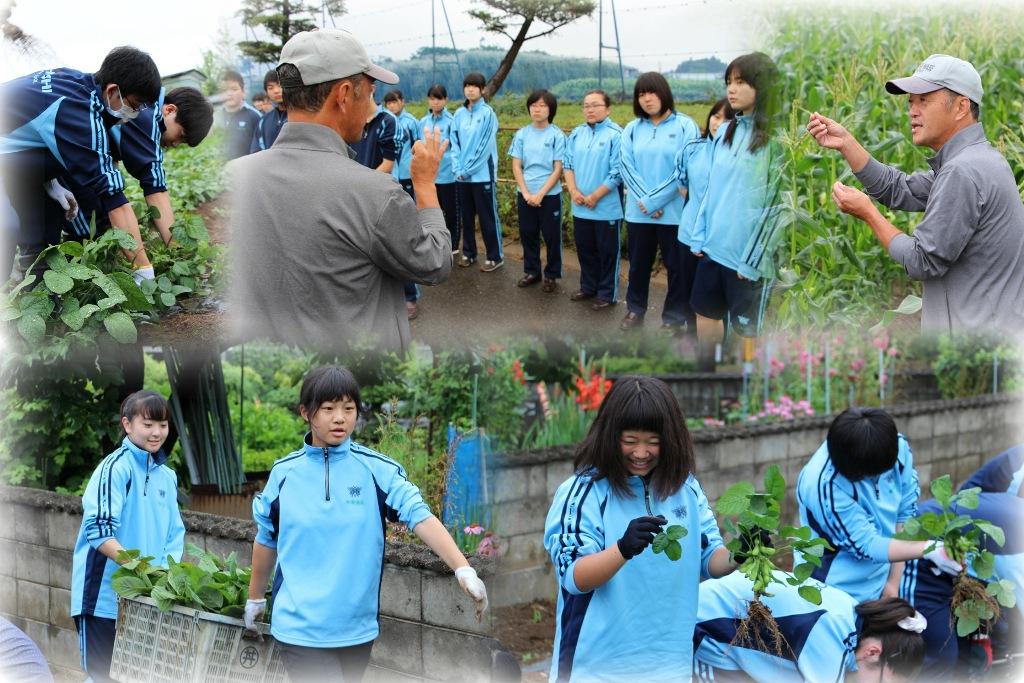 http://www2.shoshi.ed.jp/news/2018.07.09_harvest-1.jpg