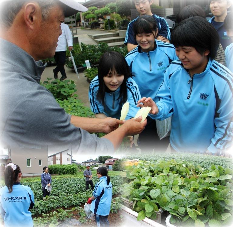 http://www2.shoshi.ed.jp/news/2018.07.09_harvest-2.jpg